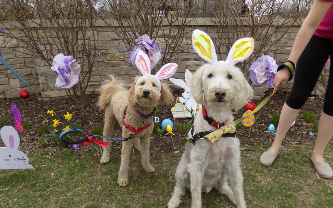 Easter Egg Hunt Photos | Happy Dog Barkery - photo#19