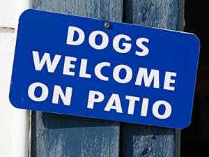 Dog Friendly Restaurants in Downtown Downers Grove
