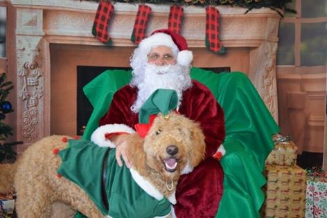 Pictures with Santa | Happy Dog Barkery - photo#24